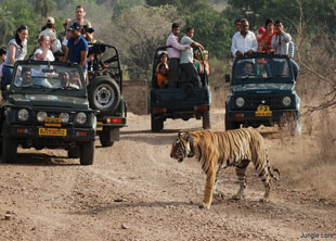 Exotic Rajasthan Tour with Wildlife